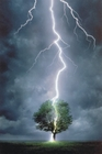 Lightning Striking Tree Science Poster