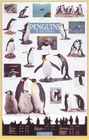 Penguins of the World Science Poster