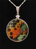 Rainbow Butterfly Wing Jewelry - Authentic