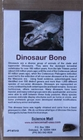 Real Dinosaur Bone