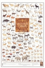 Ungulates (Hoofed Animals)  of Africa Poster