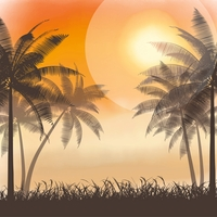 At The Seashore: Palm Trees 12 x 12 Paper