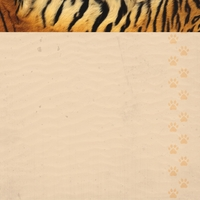 At The Zoo: Tiger 12 x 12 Paper