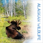 Beautiful Alaska: Wildlife 12 x 12 Paper