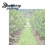 Berry Picking: Blueberry Picking 2 Piece Laser Die Cut Kit
