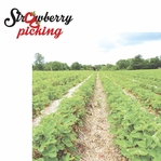 Berry Picking: Strawberry Picking 2 Piece Laser Die Cut Kit