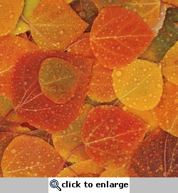 Fall Memories: Leaves with Dew 12 x 12 Paper