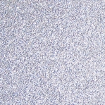 Glitter Cardstock: Silver 12 x 12 Mess-Free Glitter Cardstock