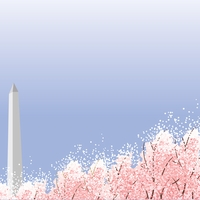 Nation's Capital: Spring in D.C.  12 x 12 Paper