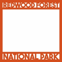 National Parks: Redwood Forest 12 x 12 Overlay Laser Die Cut