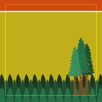 National Parks: Redwood Forest 12 x 12 Paper