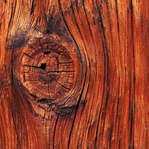 Nature: Wood with Knot 12 x 12 Paper