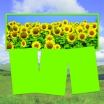 Panorama: Sunflower Field Frame Kit