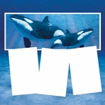 Panorama: Under the Sea: Whales Frame Kit