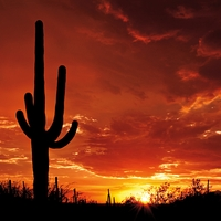 Southwest: Saguaro Sunset 12 x 12 Paper