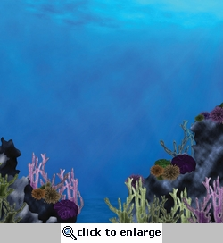 Under The Sea: Coral Reef 12 x 12 Double-Sided Paper