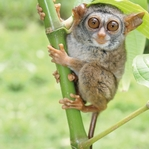 Visiting the Zoo: Tarsier 12 x 12 Paper