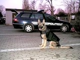 K9 dogs for explosive and drug  detection