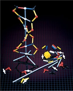 12 Packet DNA Model Kit