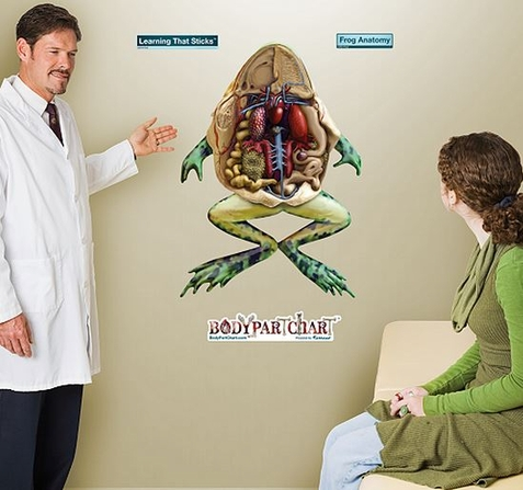 Fathead Frog Anatomy Wall Decal