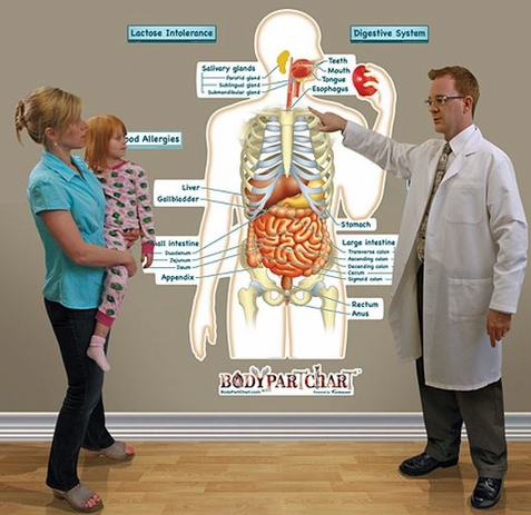 Fathead Simplified Digestive System Labeled Wall Decal