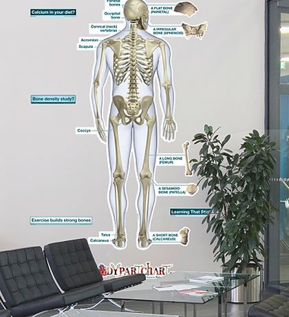 Fathead Skeletal System - Rear Labeled Wall Decal