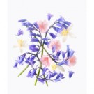 Bluebell - 20% Off