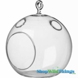 "Candle Holder- Hanging or Tabletop Glass  6"" - Round Terrarium"