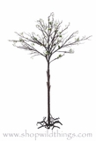 "CLEARANCE Cherry Tree 65"" Tall - Natural Beauty!"