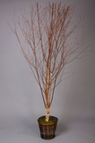 CLEARANCE! - Birch Trees 7' Tall - Winter Birch Deluxe