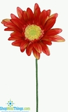 "CLEARANCE-Designer Gerber Daisy - Persimmon LARGE 10""  x 27"""