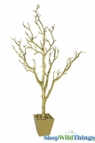 Tree in Pot, 3' Tall, Gold Bendable Manzanita