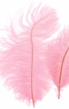 "Light Pink Ostrich Feathers 29""-32""- SPADS"