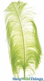 "Lime Green Ostrich Feathers 13"" - 15"" - SPADS"
