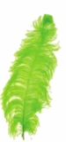 """Lime Green Ostrich Feathers 13"""" - 15"""" - SPADS"""