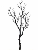 "Manzanita Glitter Tree Branch - Black - 28"" Long"