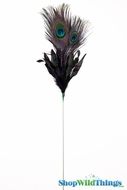 "Peacock Feathers Eye & Black Quills 27"" Long x 6"" Wide - On Floral Pick - First Quality"