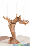 """SALE! Root Taper Candle Holder 14""""x16"""" - Triple Candelabra"""
