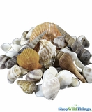 Seashells - Container Fill & Table Scatter - 4 Pounds - 12 Bags