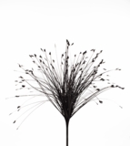 "Spray, Onion Grass Bush Black 28"" - Holographic - Extra Wide"