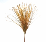 "Spray, Onion Grass Bush Gold 28"" - Holographic - Extra Wide"