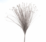 "Spray, Onion Grass Bush Silver 28"" - Holographic - Extra Wide"