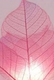 String Lights Flower Rubber Tree Leaves,  Regular  Pink