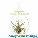 "Tear Drop Blown Glass Terrarium / Birdfeeder 10"" x 5.5"" (Hanging or Tabletop)"