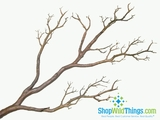 "Tree Branch, Natural Brown, Bendable - Manzanita 31""  Tall"