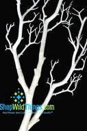"Tree Branch, White  31""  Manzanita Branch"