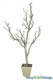 Tree in Pot, 3' Tall, Champagne Bendable Manzanita
