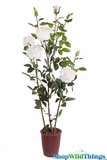 "Rose Bush in Pot - Lifesize 49""H White - High Quality Silk Roses"