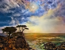 Solar Eclipse and the Lone Cypress