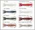 Berkley Gulp! Saltwater Hollow Shrimp 4in